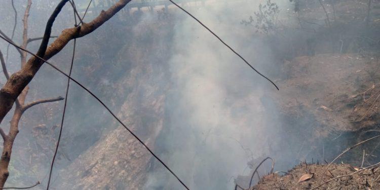 Kebakaran Hutan di Jalan Amal Lama. : Istimewa