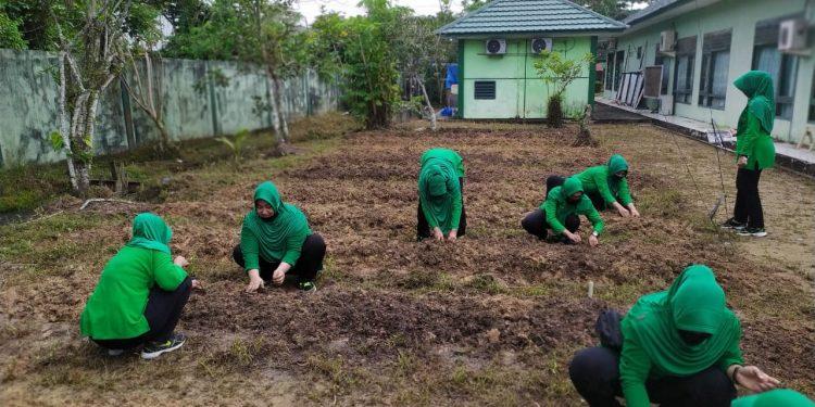 Ibu-ibu Persit KCK Cabang XIX Dim 0907 melaksanakan penanaman bibit sayuran.Foto:Pendim0907/Trk