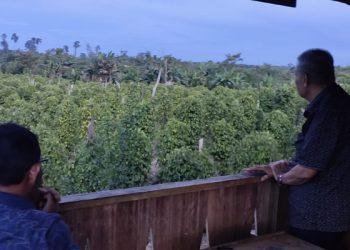 Wagub Kaltara Udin Hianggio Bermalam di Kebun Merica. Poto: Istimewa