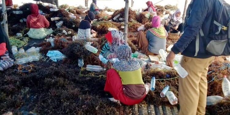 Yahya saat mengajak seluruh pekerja informal rumput laut untuk menerapkan protokol kesehatan. Foto : Humas Provinsi Kaltara