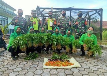 Personil Koramil 0907/Tarteng berserta Ibu-ibu Persit KCK Cab XIX melaksanakan kegiatan panen sayur mayur. Foto:Doc.Babinsa