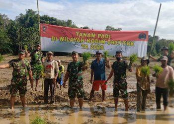 Babinsa jajaran Kodim 0907/Tarakan melaksanakan pendampingan penanaman padi dilahan milik Bapak Tepu warga RT.09 Kel.Kampung 1 Skip. Foto: Doc.Babinsa