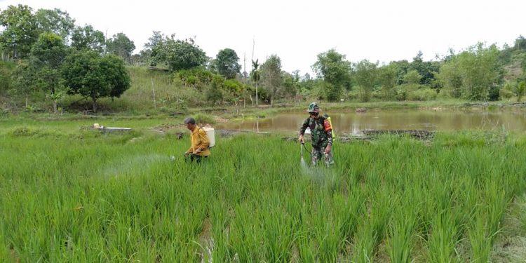 Foto:Doc. Babinsa Dim 0907/Tarakan