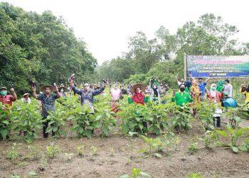 Pelaksanaan panen serentak di P2L KWT Mawar Desa Antutan dalam rangka peringatan HTN 2020, Kamis (24/9). Foto: Humas Pemprov Kaltara