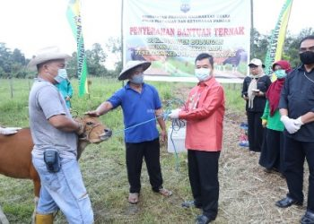 BANTUAN TERNAK : Pjs Gubernur Kaltara, Teguh Setyabudi saat menyerahkan bantuan ternak sapi kepada petani Desa Pejalin, Tanjung Palas, Jumat (23/10) lalu. Foto: HumasProvinsi Kaltara