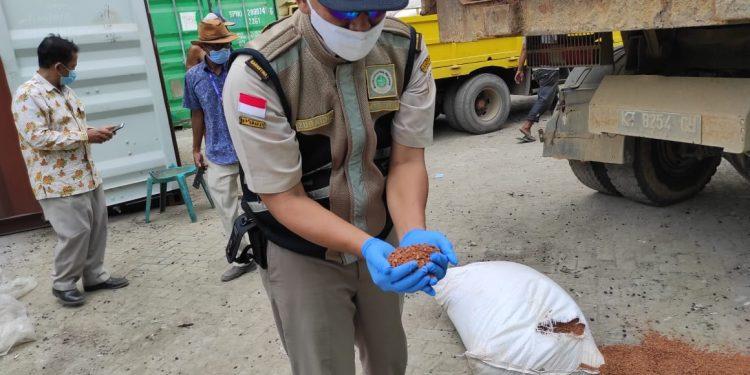 Petugas Karantina Cek Serbuk Kulit Kayu Bakau Yang Akan Dikirim Ke Filipina. fot: Istimewa/BKP