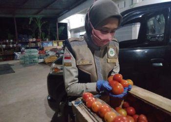 Karantina pertanian Tarakan melakukan sertifikasi ekspor tomat tujuan Malaysia Foto: Karantina Pertanian Tarakan