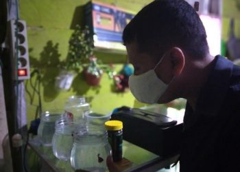 Riko, salah satu pembudidaya ikan cupang di Desa Tideng Pale, Kecamatan Sesayap KTT. Foto: Fokusborneo