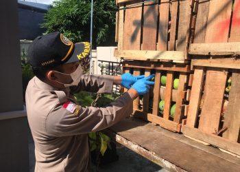 Pejabat Karantina Pertanian Tarakan Wilker Nunukan melakukan pemeriksaan fisik terhadap buah buahan yang akan diekspor ke malaysia. Foto: Ist
