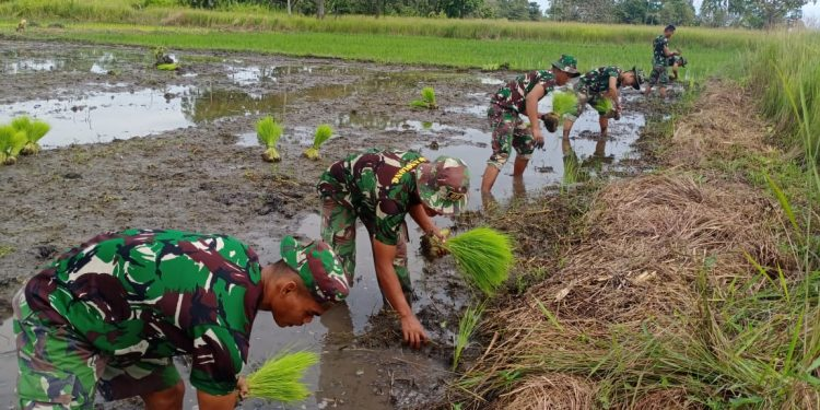 Satgas Yonif 611/Awl, melaksanakan kegiatan tanam padi untuk membantu masyarakat memperkuat ketahanan pangan di Kampung Kondo Distrik Neukenjerai.Foto: Pen Yonif 611/Awl