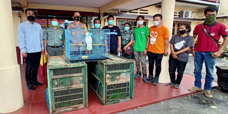 Polres Tarakan dan BKSDA Amankan 2 Ekor Macan Dahan dan 1 Ekor Burung Kakak Tua. Foto: fokusborneo.com