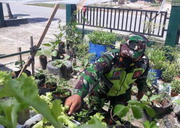 Babinsa Koramil Tarteng, Serma Suprianto mengubah lahan sempit diperkarangan rumahnya menjadi lahan produktif guna memenuhi kebutuhan sehari hari.Foto : Doc.Babinsa