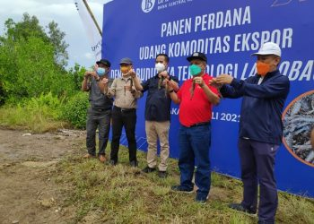Kepala KPwBI Provinsi Kaltara Yufrizal menunjukan udang hasil panen. Foto : Humas Bank Indonesia.