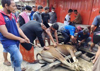 Ketua FKKRT Kota Tarakan Rusli Jabba bersama Wali Kota Tarakan dr. Khairul menyaksikan pemotongan hewan kurban. Foto : Istimewa