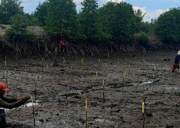 Kegiatan Penanaman Bibit Mangrove oleh Masyarakat di Kepulauan Riau. Foto: IST/BRGM